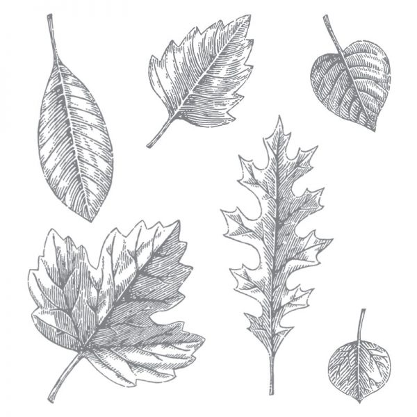 Vintage Leaves, Stampin' Up! 138802
